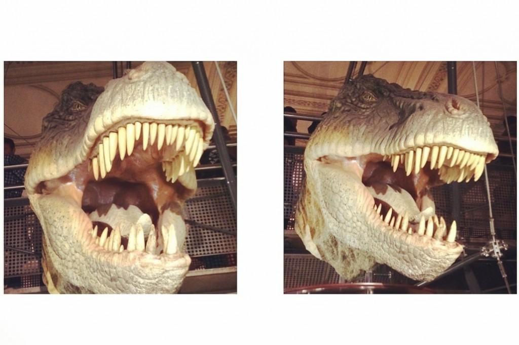 dinosaure au musée histoire naturelle à Londres