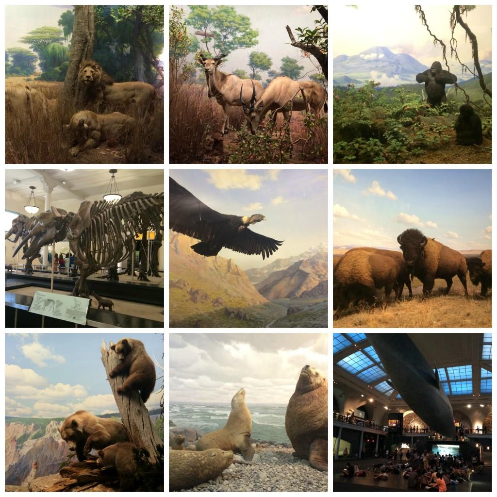 Diorama du Musée d'Histoire Naturelle- New-York