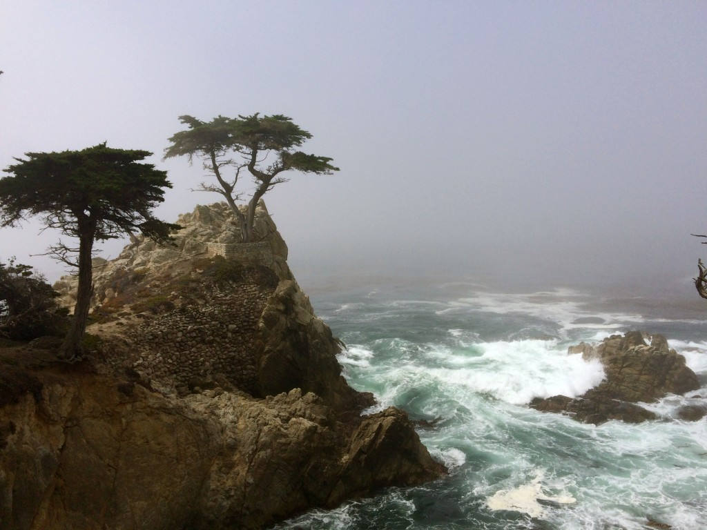 17 mile Drive - Lone cypress point
