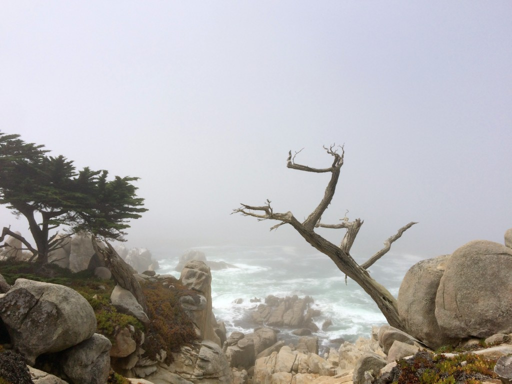 Lone Cypress Point 17 mile Drive - Monterey