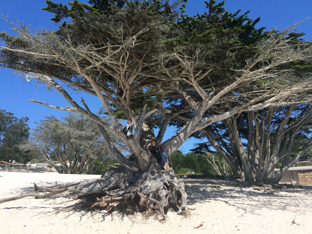 Sur la plage de Carmel en Californie