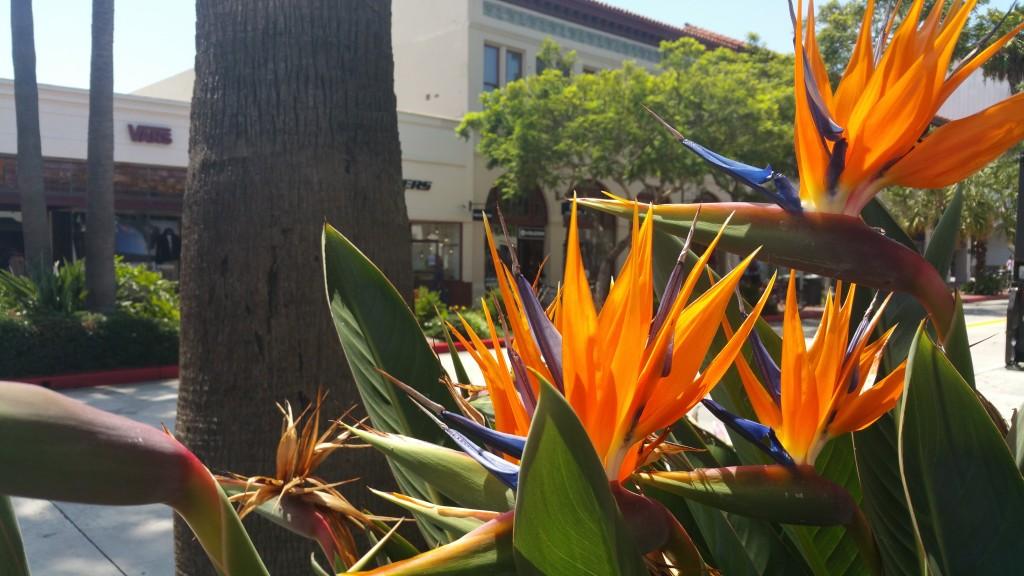 Dans les rues de Santa Barbara