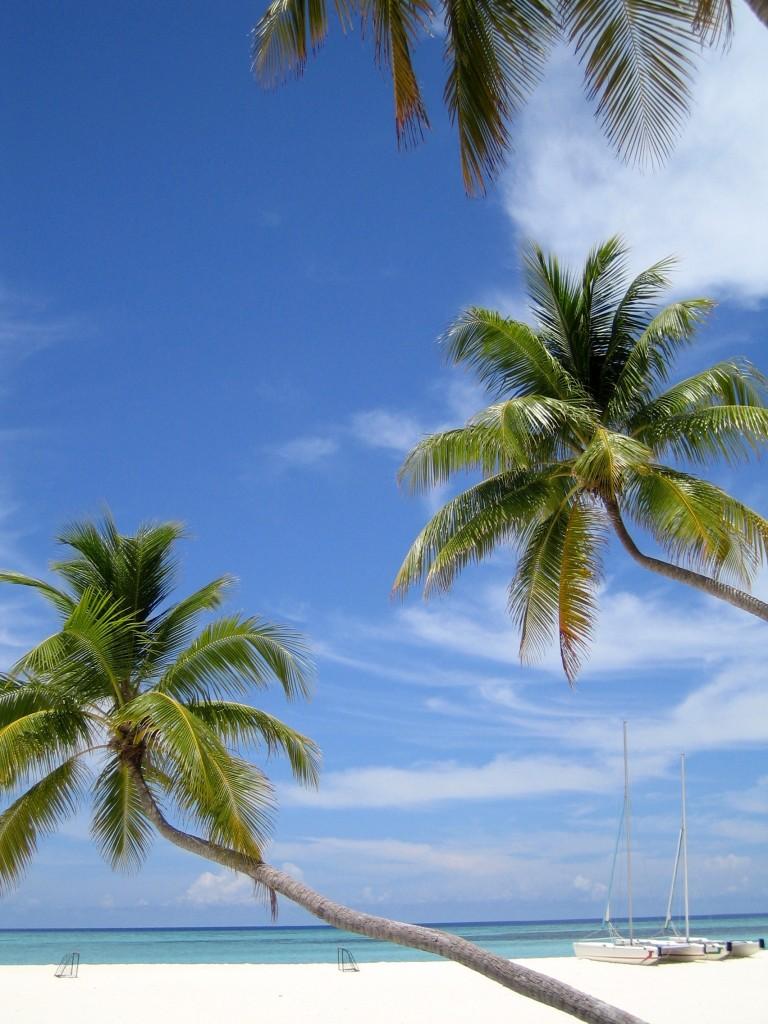 Palmiers sur l'île de Velavaru aux Maldives