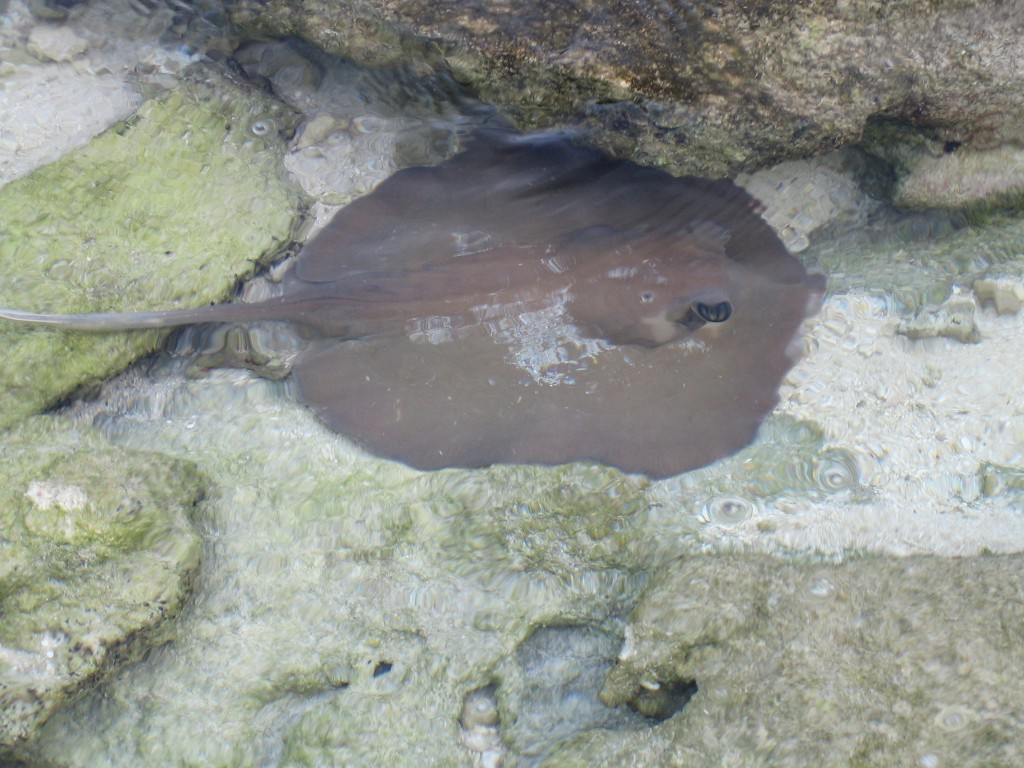 raie - maldives