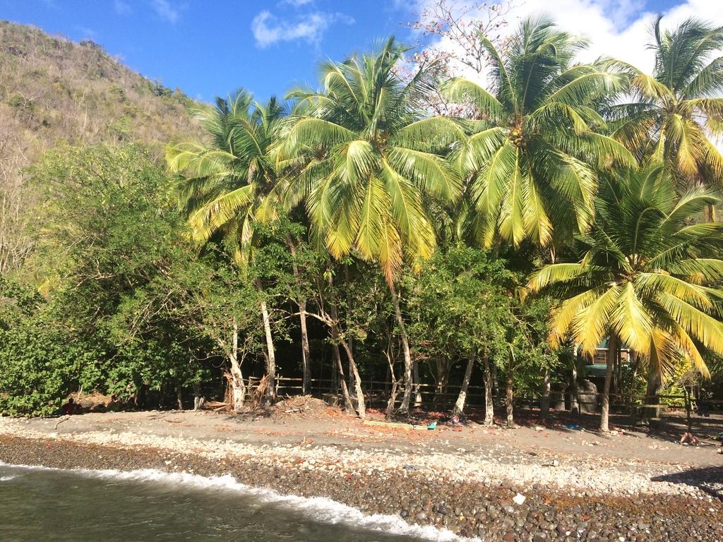 Plage de sable noir à Anse Noire en Martinique