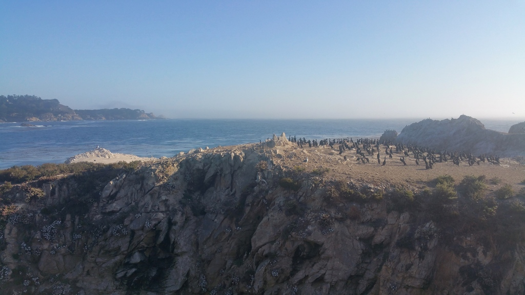 la-vie-en-rose-flamant-point-lobos-bird-island-2
