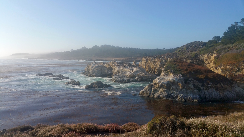 la-vie-en-rose-flamant-point-lobos-bird-island