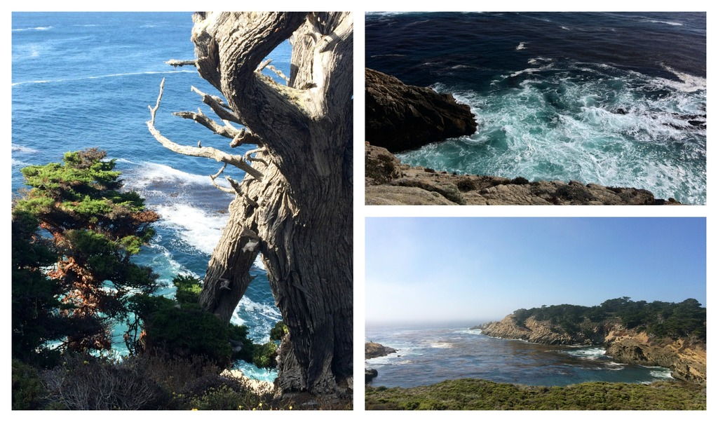 la-vie-en-rose-flamant-point-lobos-frise