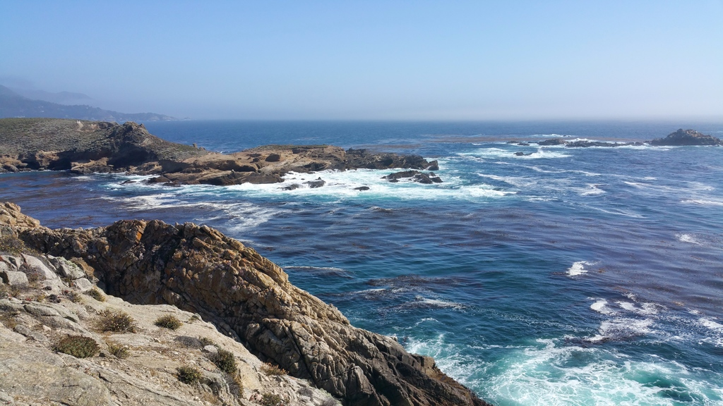 la-vie-en-rose-flamant-point-lobos-trail-3