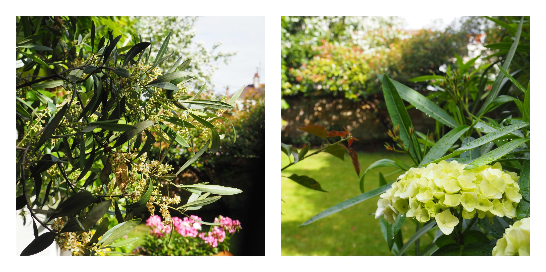 la-vie-en-rose-flamant-fleurs-jardin