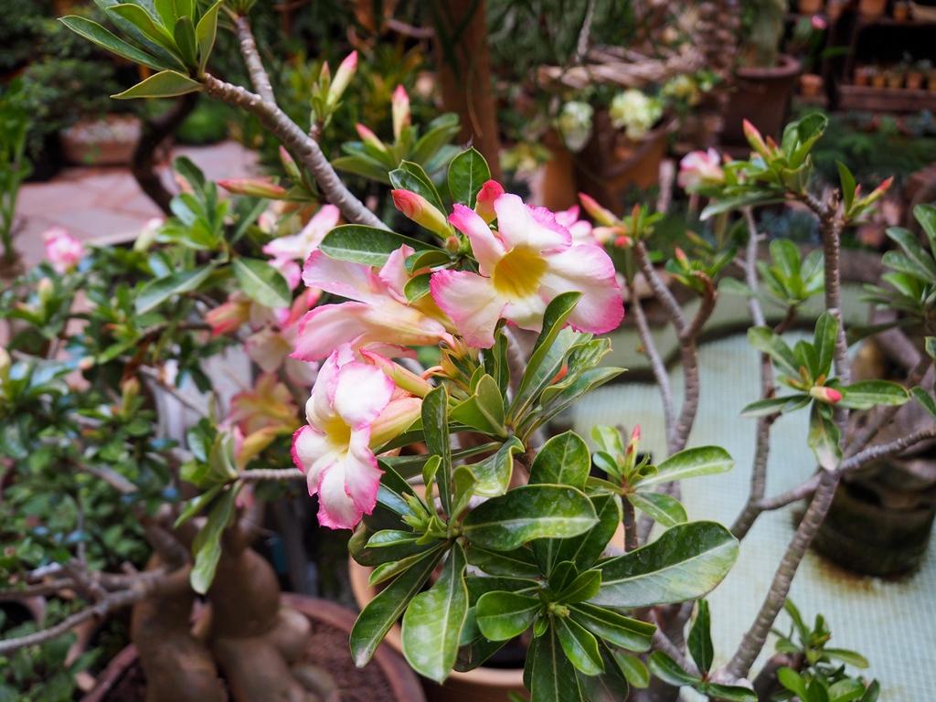 Les jolies fleurs - Les Pots d'Uzès