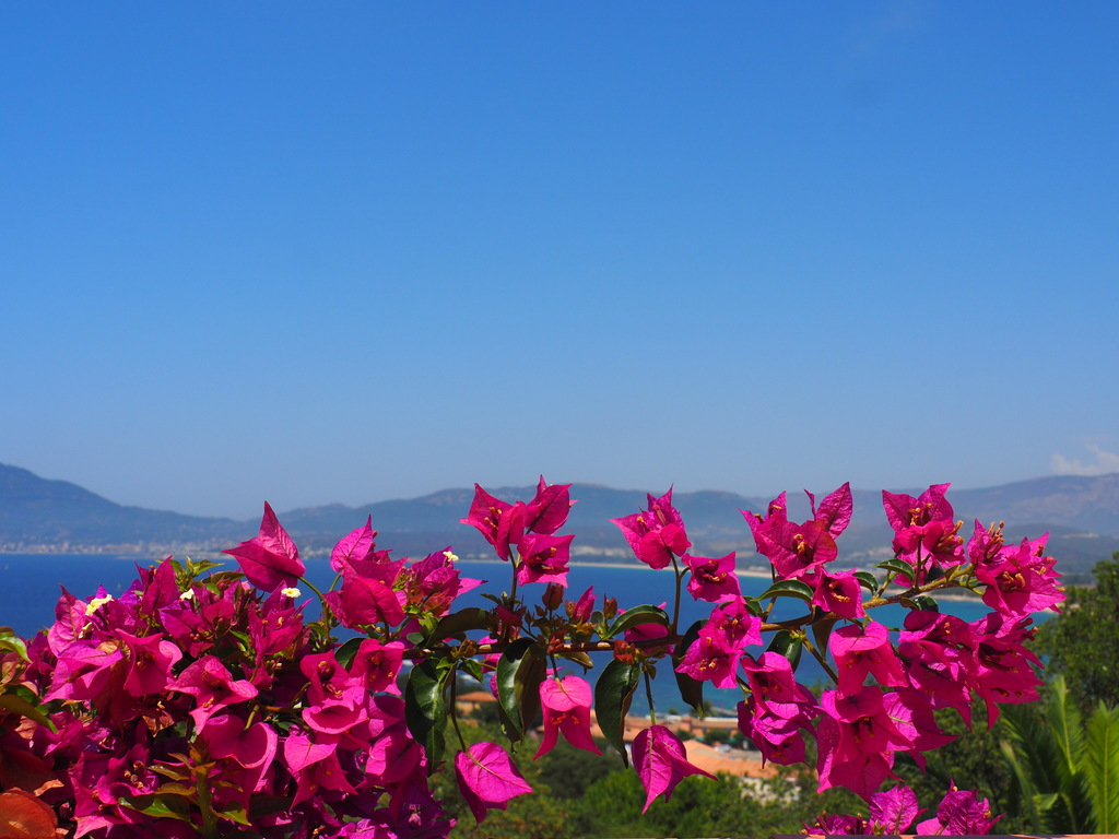 Vue sur la baie d'Ajaccio
