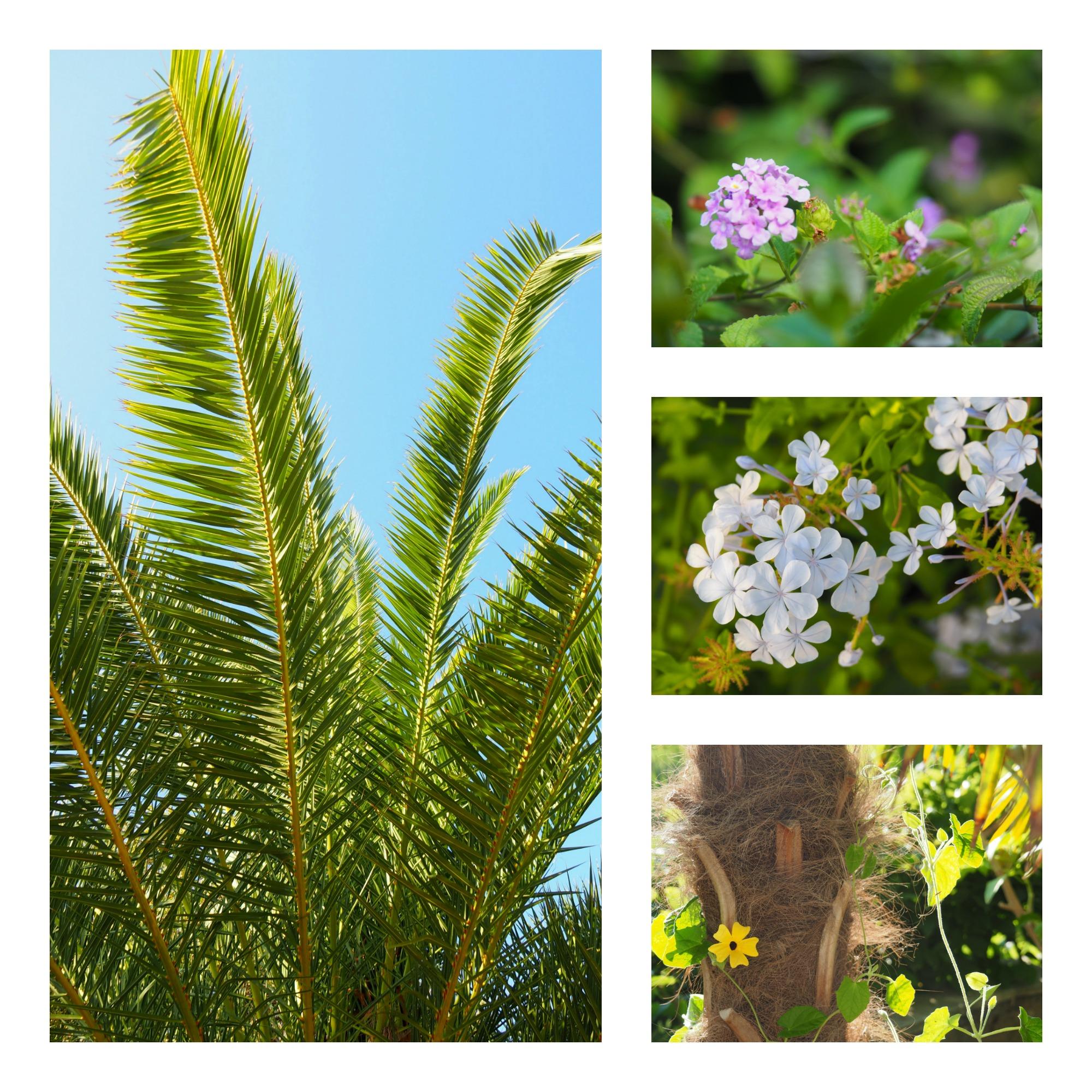 fleurs et jardin à Porticcio
