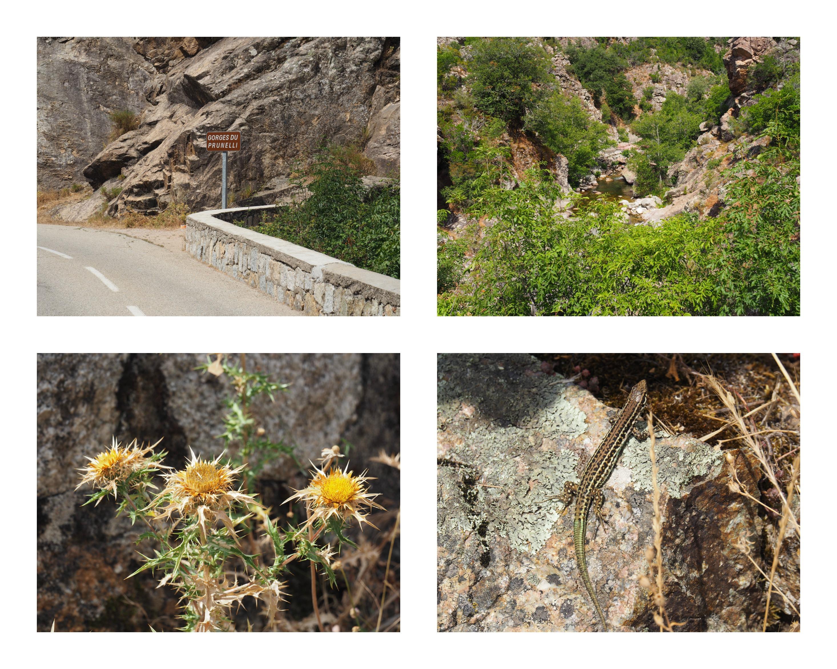 Les Gorges du Prunelli en Corse