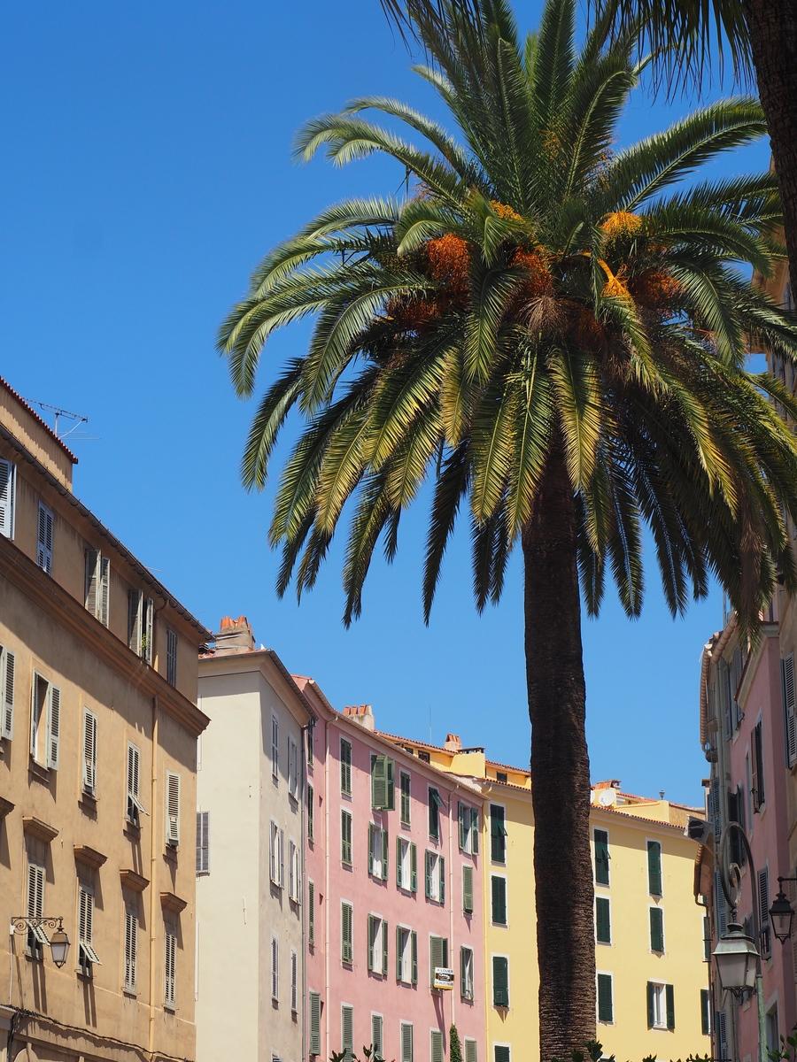 Palmiers et immeubles colorés à Ajaccio en Corse