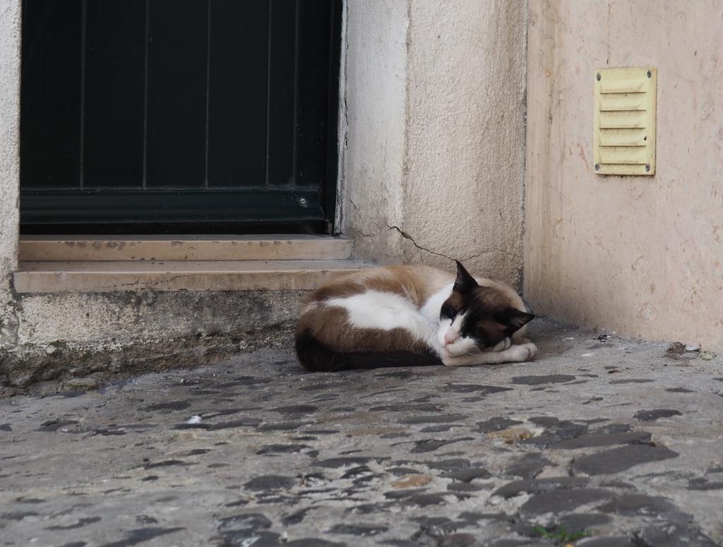 Chat dans les ruelles de l'Alfama à Lisbonne