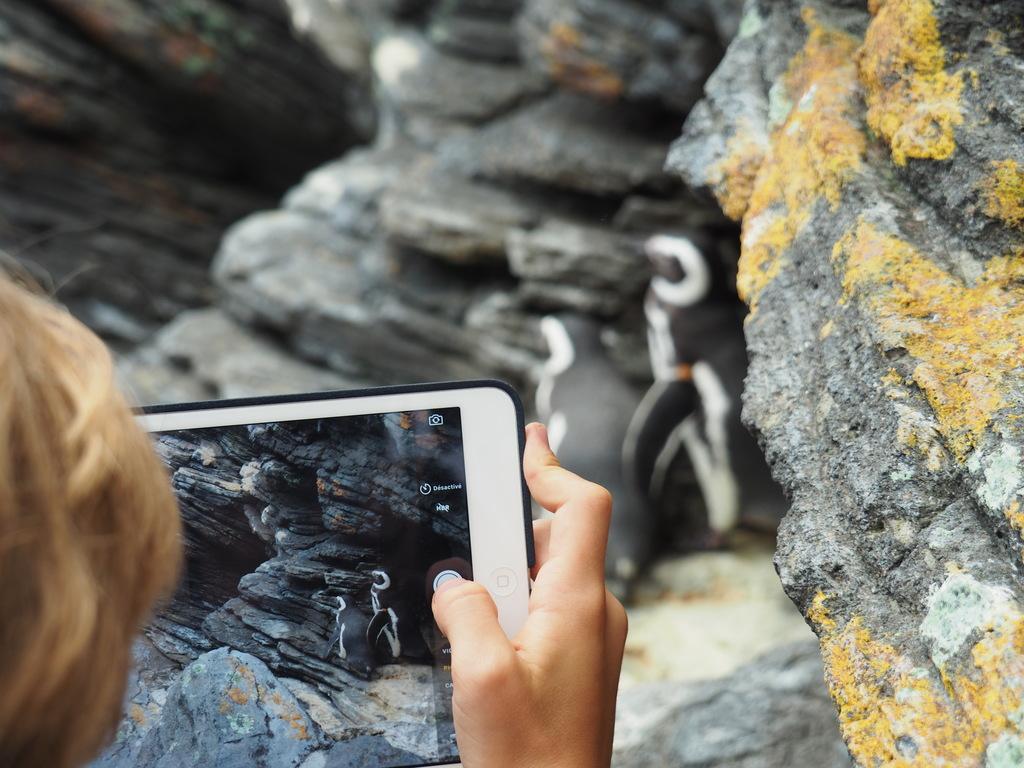 Pingouins et macareux - Océanario - Parc des Nations à Lisbonne