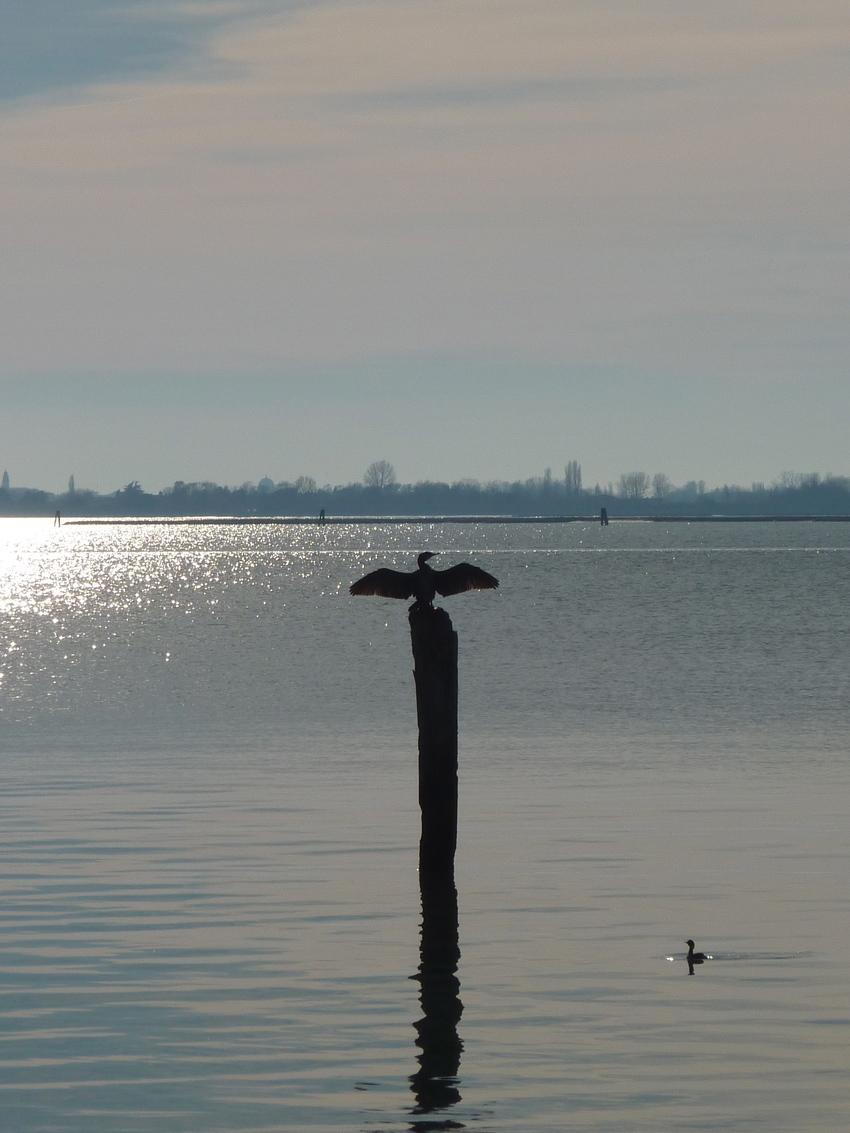Venise en hiver, méditation du cormorant ;)