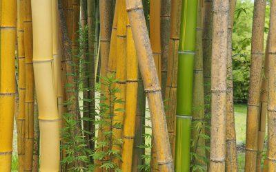 La Bambouseraie en Cévennes, un endroit zen à visiter absolument !