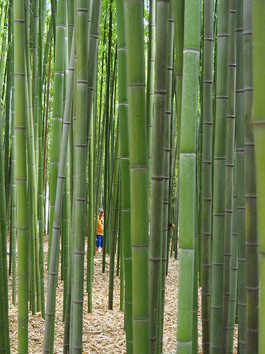 La Bambouseraie à Anduze, variété de bambous