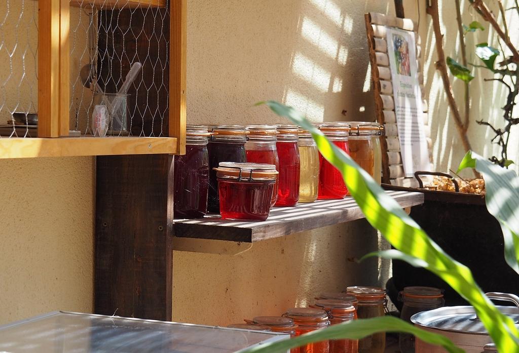La Bambouseraie à Anduze, serre, exposition plantes tinctoriales