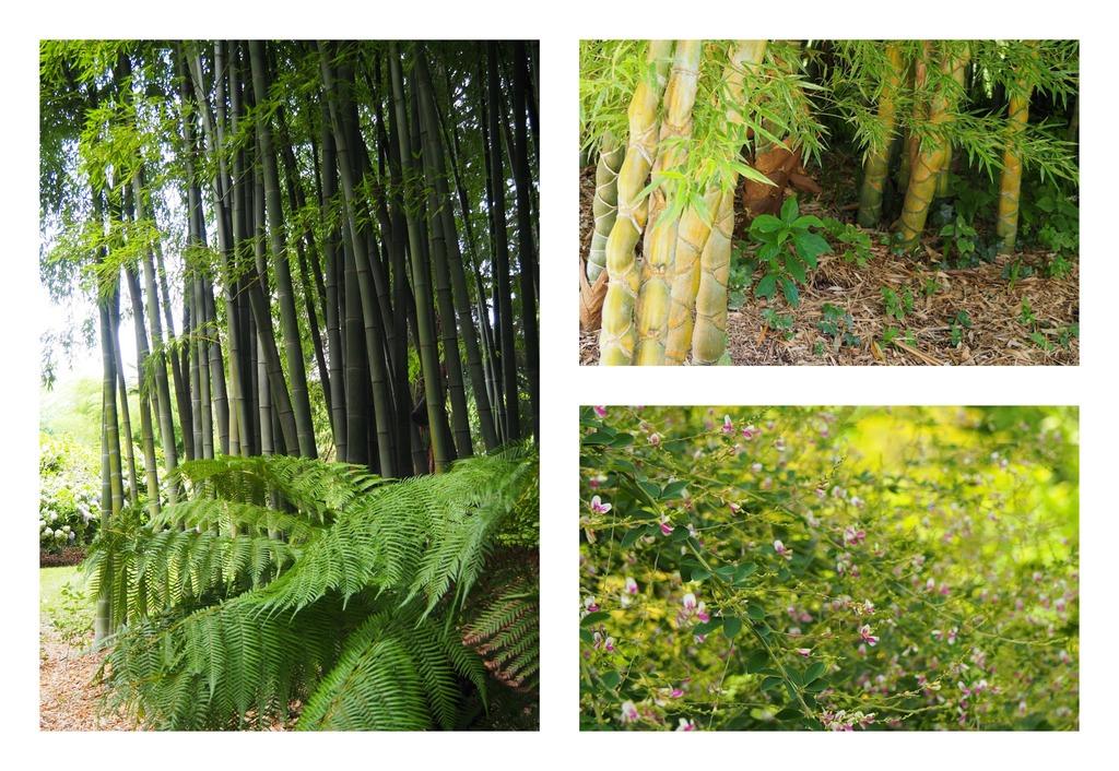La Bambouseraie à Anduze, différentes variétés de bambous