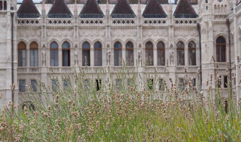 Visite de Budapest en famille, itinéraire sur 5 jours - Parlement bucolique