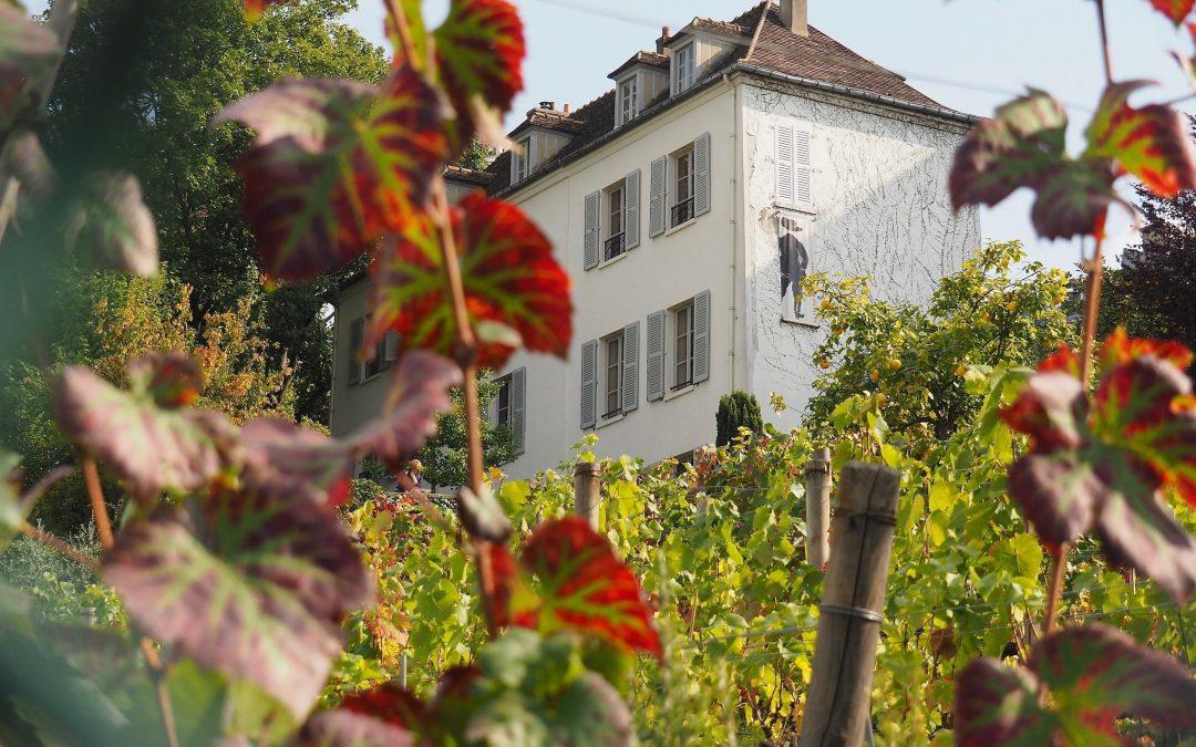 La vigne de Montmartre, visite d'un lieu rare et insolite en plein Paris !