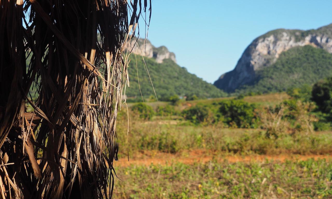 3 jours à Viñales (et au milieu des Mogotes)... une parenthèse hors du temps - vue sur les Mogotes