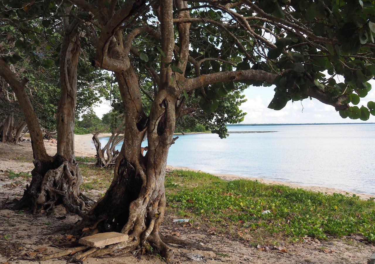 Cuba - Stop plongée à Playa Larga : nos impressions !