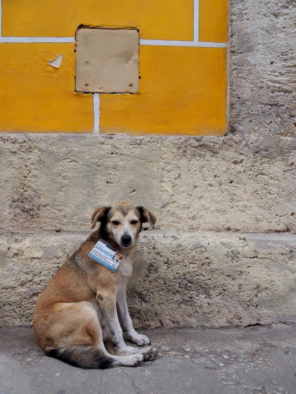3 jours à la Havane - chien cubain !