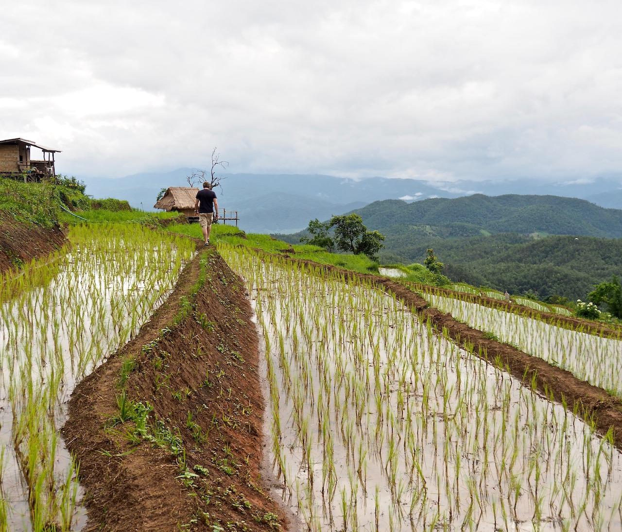 Une nuit à Ban Pa Pong Pieng : une expérience inoubliable dans les plus belles rizières en terrasse de Thaïlande - Balade au milieu des rizières