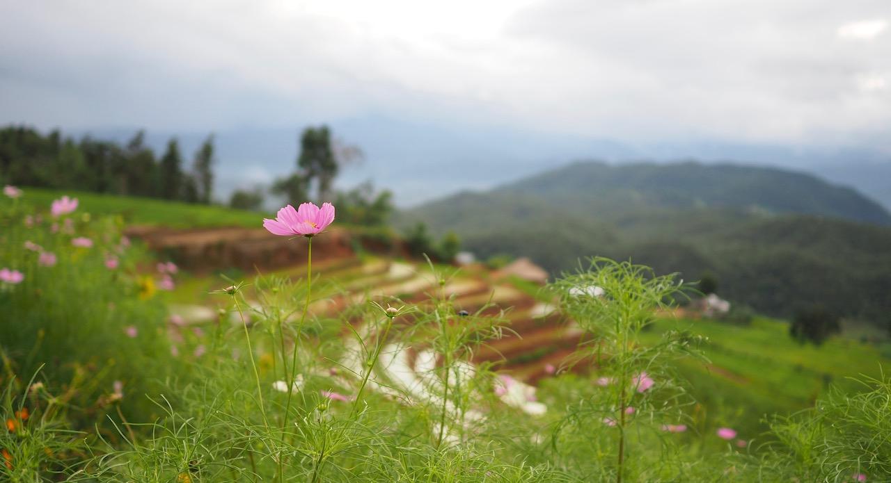 Une nuit dans les rizières de Ban Pa Pong Pieng dans la province de Chiang Mai : vue de notre guest house