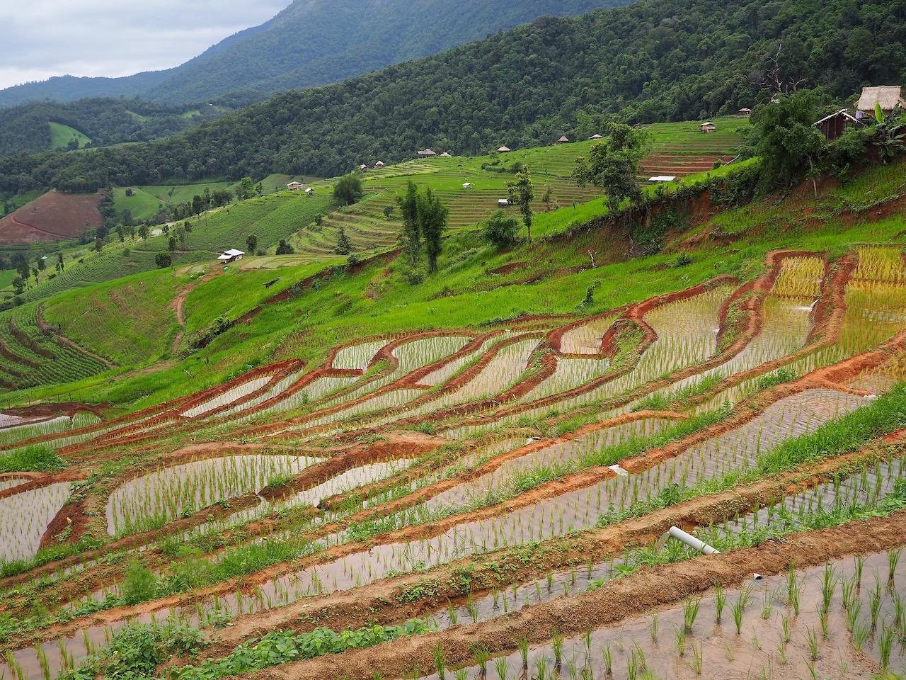 Une nuit dans les rizières de Ban Pa Pong Pieng dans la province de Chiang Mai : balade dans les rizières