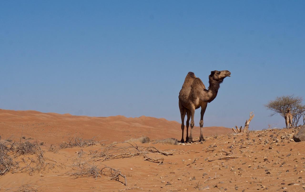 Voyage à Oman, désert de Wahiba Sands