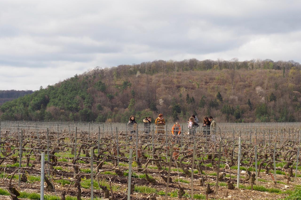 Week-end en Aube en Champagne - visite des vignes - Cave Philippe Fourrier