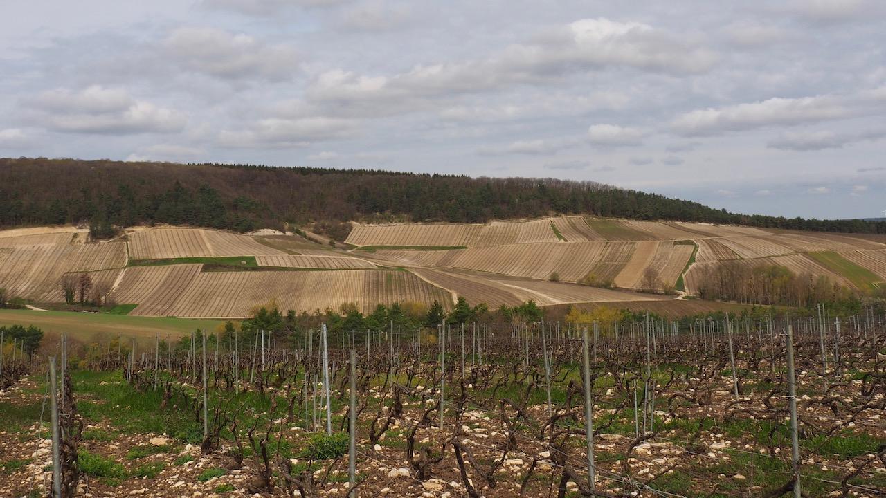 Week-end en Aube en Champagne - visite des vignes - Philippe Fourrier